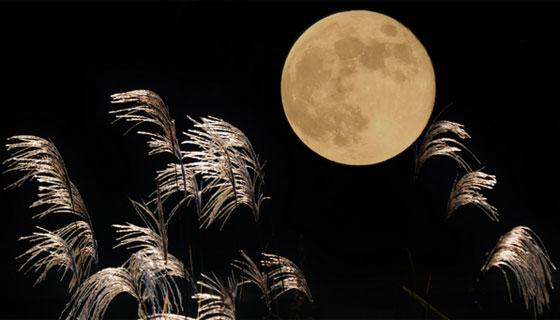 十五夜が満月とは限らない!丸いのはどっち!?