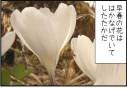 【本日πの日】クロッカスの花姿を数学的に検証してみる