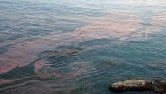 沖合の赤潮