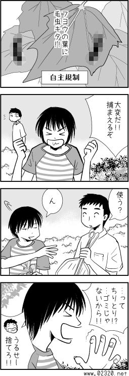 フタトガリコヤガを食べようと思っていたら芙蓉の葉に大量発生