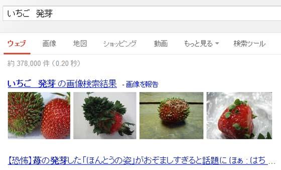 イチゴが発芽した奇形写真