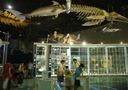 国立科学博物館 地球館1階