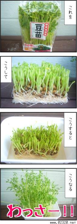 豆苗の再生産モニタリング