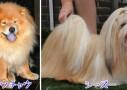 獅子舞みてて思ったけど中国人って犬とライオン混同してない?