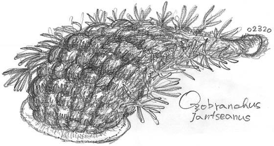 Pencil Drawing ヌマエラビル