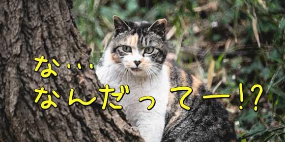 な、なんだってー!?