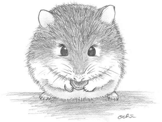 Pencil Drawing, Roborovski Dwarf Hamster, ロボロフスキーハムスター