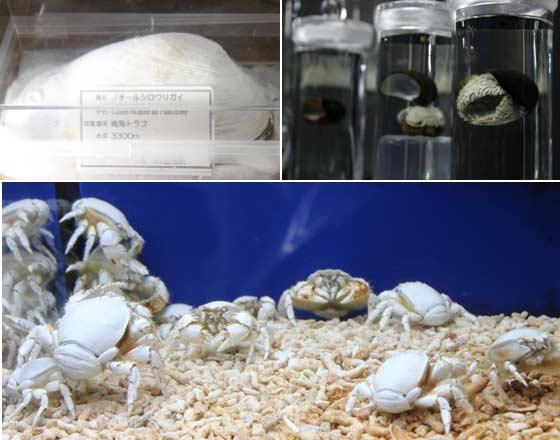 深海生物の群展示