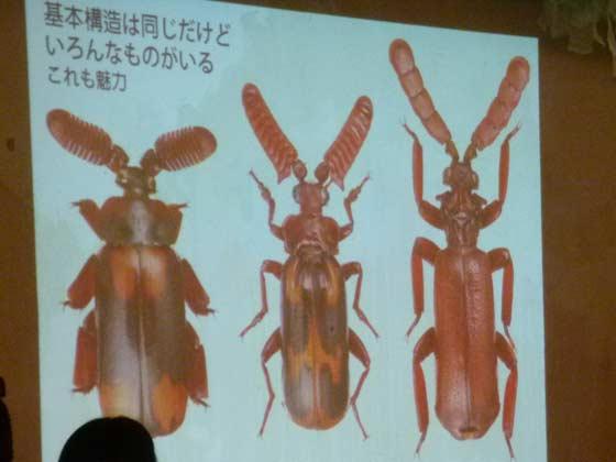 ヒゲブトオサムシの多様性