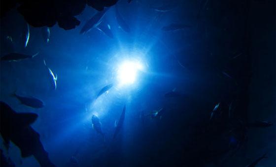 片道4秒の深海旅行を支えるJAMSTECの音響画像伝送技術