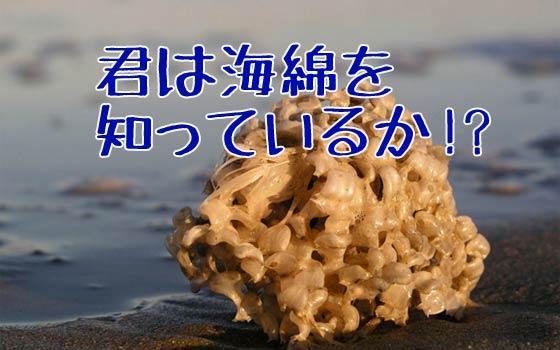 海綿とバイオミメティクス(生物模倣)の古くて新しい驚きの話