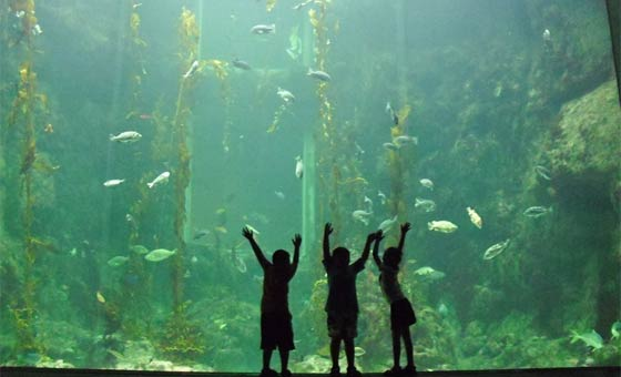 水族館が嫌いな子供は意外と多い