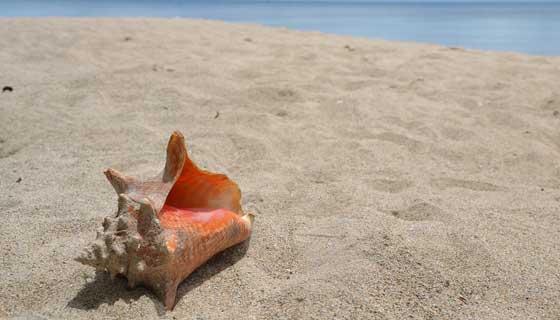 生物学者はどうやって新種を見つけるのか貝類学者に聞いてみた