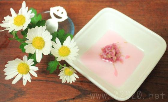 園芸種の菊を食べる