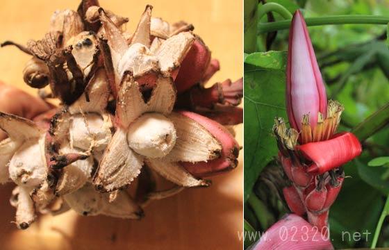 ベルチナバナナの花と実