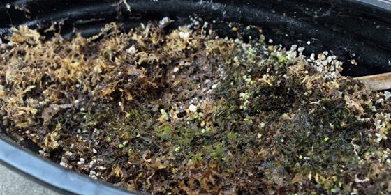 苔育苗実験の結果