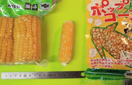 スイートコーンとフリント種とポップ種