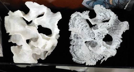生物標本の3Dプリント
