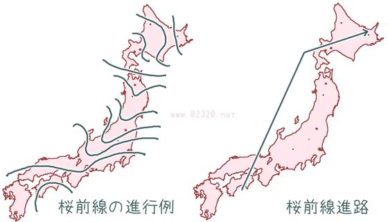 桜前線の模式図